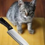 Man Fears His Cat is Plotting to Kill Him