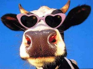 Cow-Appreciation-Day