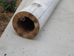column (4)