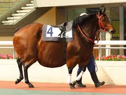 This horse has an obesity issue and will be helped by the ban.