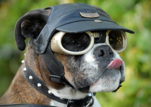 Doggles-Dog-Goggles-1