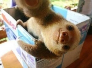 This is not a selfie of Stan Bargemeyer. This is a selfie of a small Sloth making a duck face. Stan Bargemeyer could not actually provide us with the selfie he supposedly took for this opinion piece.