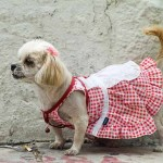 Pet Nudity Banned, Clothing Mandated