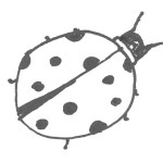 1972- Ladybug Fish Discovered in Coma