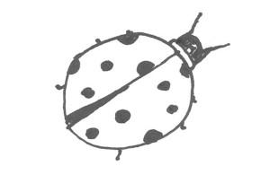 ladybug fish 5 25 15 large