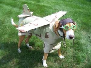 dogplane