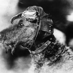 Pet Pilot Pioneers Paved Path