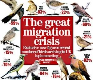 migration_birds_crisis