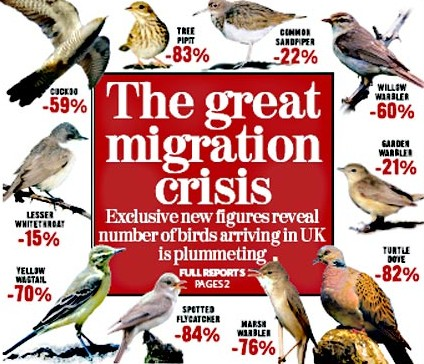 the pattern of migration of birds during different seasons