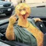 Manhunt Underway for Bird-Giver